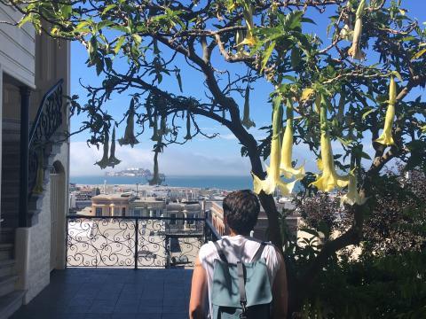 [Photo : Vue sur Alcatraz depuis Russian Hill San Francisco]