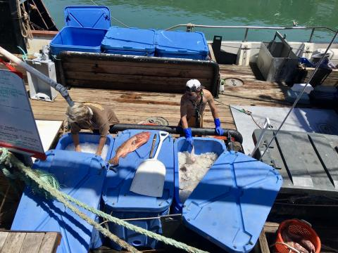[Photo : La pêche à  Fisherman's Wharf Port de San Francisco]