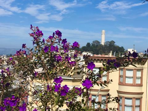 [Photo : fleurs et vue sur Coit Tower San Francisco]