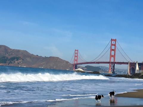 Photo : San Francisco Golden Gate Bridge